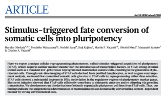 STAP 세포의 제작 방법을 담은 RIKEN 오보카타 하루코 연구주임의 논문 - Nature 제공